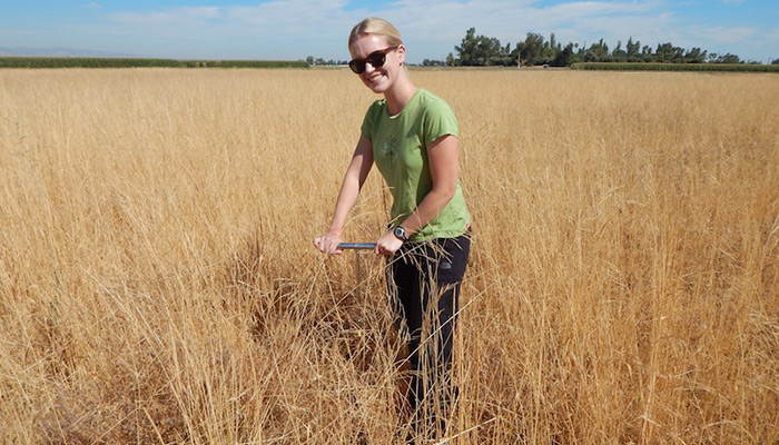 Kelly Gravuer takes a soil sample at Russell Ranch. Her soil microbe study for her Ph.D. at UC Davis yielded unexpected results.