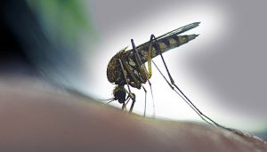 CDC Supports UC Researchers in Fighting Vector-Borne Diseases